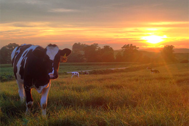 sunset on Gilmer Dairy Farm